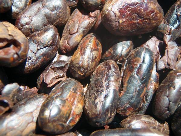 Cacaoroasted1